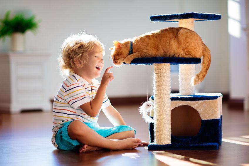 Cura della casa e animali